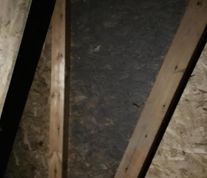 Mold Remediation Mold in the Attic
